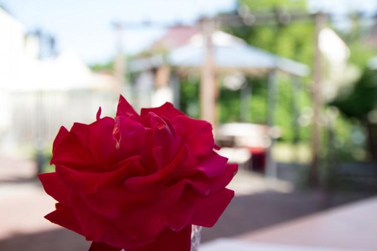 Blumen gehören zur Gewürzmühle